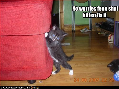 No worries, feng shui kitten fix it
