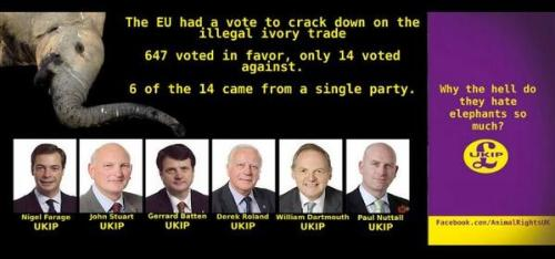 UKIP elephants