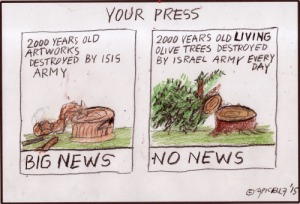 Olive Trees by Enzo Apicella